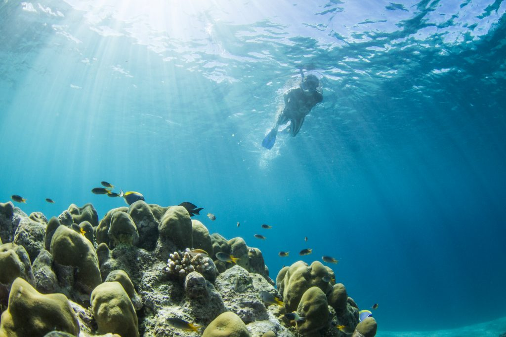 a person doing snorkeling with a beautiful corals and fishes by surf banyak
